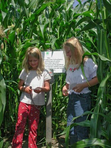 Kinder im Maislabyrinth